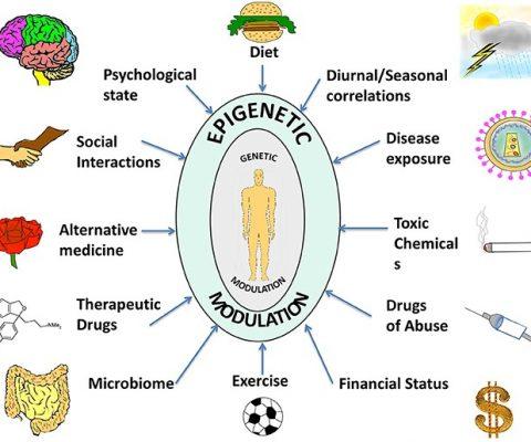 Epigenetik Genleriniz Kaderiniz Değildir